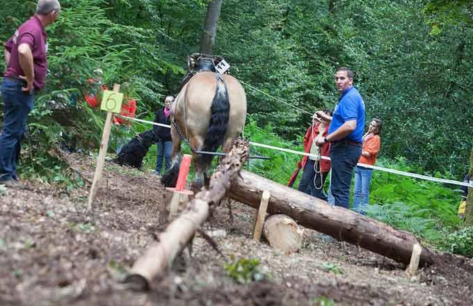 Demo Forest, foire forestière made in Belgique