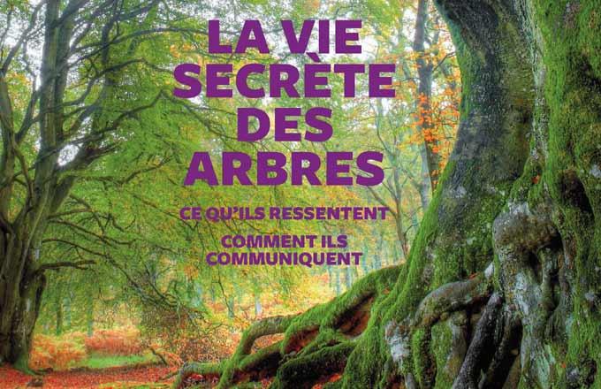 Extrait de la couverture du livre La vie secrète des arbres