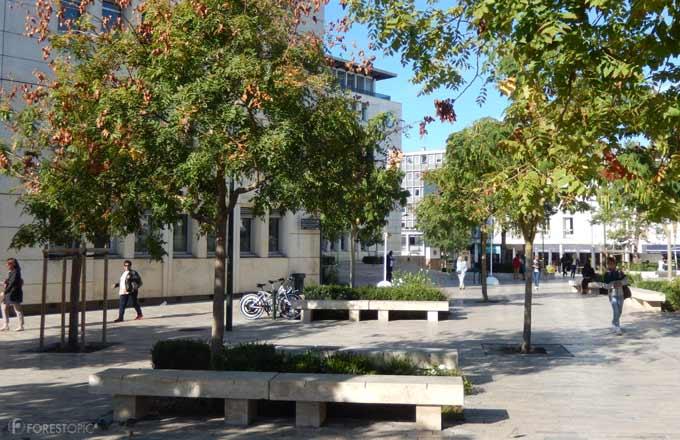 Comment Orléans adapte ses arbres au changement climatique et veut ...