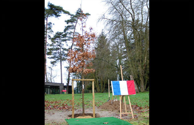 "The ""Oak of solidarity"" in Dammartin (photo: rights reserved)"