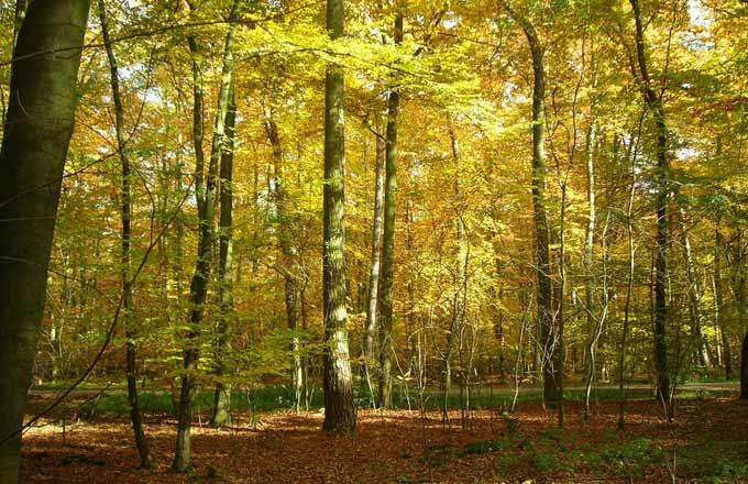 Quelle est l'efficacité de la communication et de l'entraide entre les arbres pour protéger massivement les forêts des maladies?