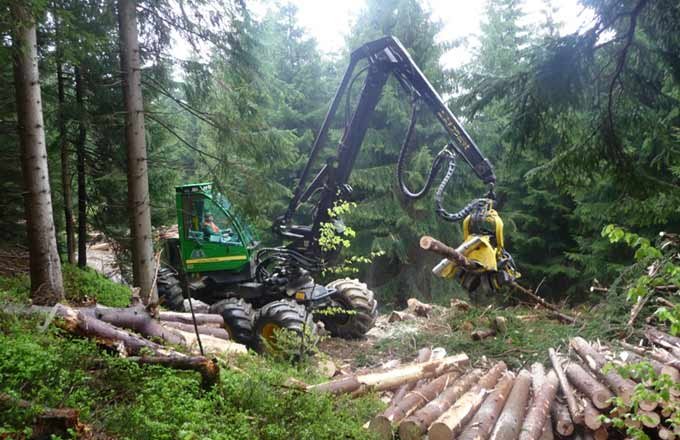 Foret-travaux-forestiers-Abatteuse-FNEDT